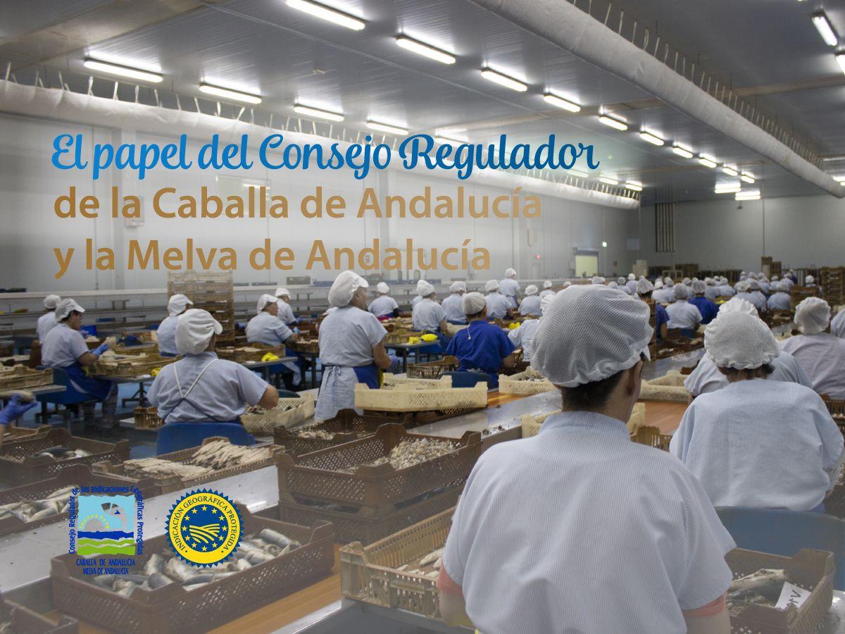 El papel del Consejo Regulador de las IGP Caballa y Melva de Andalucía