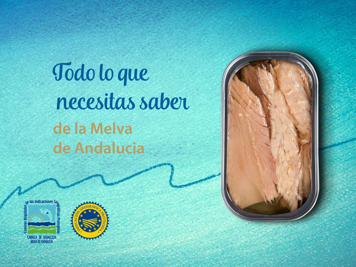 Melva de Andalucía, todo lo que necesitas saber