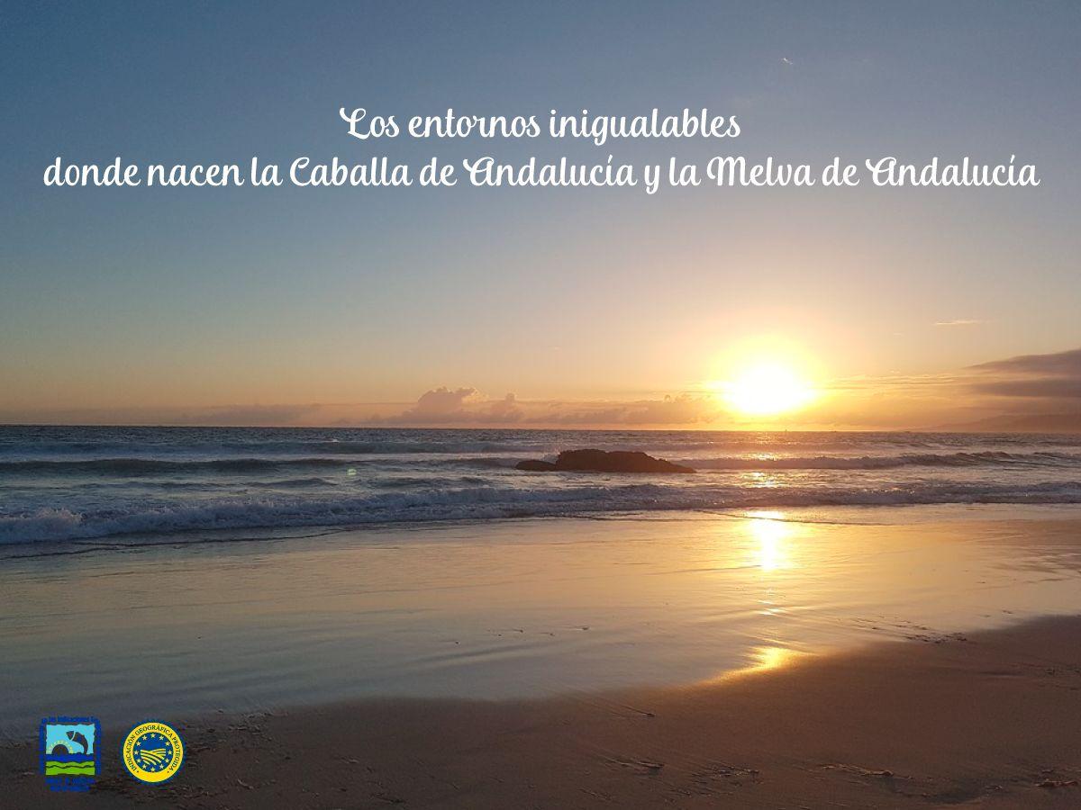 Los entornos inigualables donde nacen la Caballa de Andalucía y la Melva de Andalucía